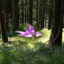Bloesemremedie Engel- en Lemurischepoort